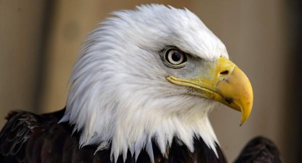 Bald Eagle Ditch